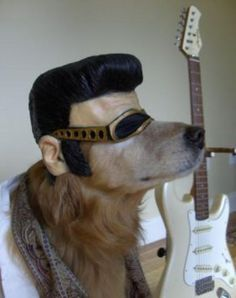 Elvis dog!  I'm about to hurt myself laughing!  Incredibly creative, and dang - that dog has some attitude!