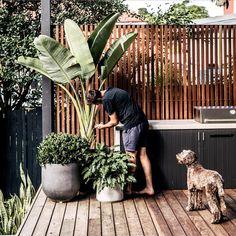 Backyard inspo - How good are long weekends Gardens love it just as Outdoor Bbq Kitchen, Outdoor Pots, Outdoor Kitchen Design, Outdoor Areas, Backyard Patio, Backyard Landscaping, Balkon Design, Garden Screening, Outdoor Entertaining