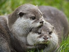 Otter holds her friend close - January 7, 2017