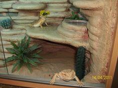 Bearded Dragon Habitat Ideas - Page 4 - Reptile Forums Bartagamen Terrarium, Reptile Terrarium, Bearded Dragon Habitat, Bearded Dragon Cage, Dragon Pet, Baby Dragon, Vivarium, Bearded Dragon Enclosure, Bearded Dragon Terrarium