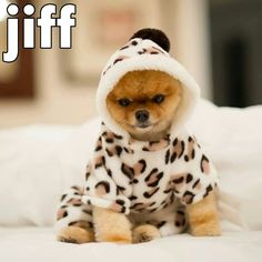 Jiff totally needs a Jungle Box to match his outfit!