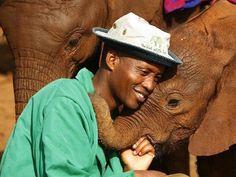 Ils défendent les derniers éléphants du Kenya : ceux sont des héros