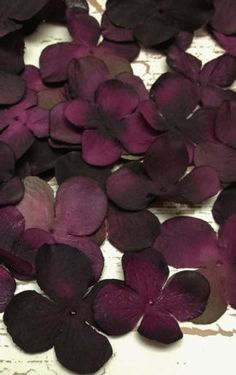Silk Flowers - 70 Hydrangea Blossoms in Shades of Eggplant Purple - Top Quality…