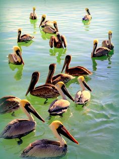 PELICAN PARTY by KAREN WILES http://karen-wiles.artistwebsites.com