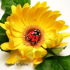 Heather Sellers created a lampwork glass ladybug bead.  #lampwork #flamework #ladybug