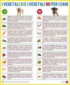I vegetali SI e i vegetali NO per i cani