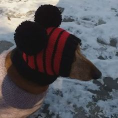 Knitted clothes dog dachshund (@dachshundknit) • Фото и видео в Instagram Dachshund Clothes, Small Dogs, Winter Hats, Handmade, Fashion, Moda, Hand Made, La Mode, Little Dogs