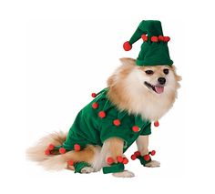 Christmas dog costumes cute! | Pet pictures | Pinterest | Christmas dog Dog and Pet services  sc 1 st  Pinterest & Christmas dog costumes cute! | Pet pictures | Pinterest | Christmas ...