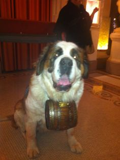 We love the accessory he is wearing!  #Paris new years eve , #avenue Montaigne , #plaza athanee, #Sex in the city season 6, #big, #Alexander petrofsky , #shopping , #Nina Ricci, #Christmas , #marni, #Christian dior , #st Bernard , #barrel , #Switzerland , #Dog, #adorable , #necklace , #fashion accessory, #tri tone, #happy , #Carrie , #Louis Vuitton , #l'avenue restaurant ,