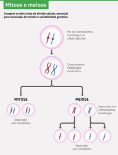 Divisão celular: mitose e meiose | Eu Quero Biologia Preschool Science Activities, Preschool Education, Teaching Science, Science Education, Study Help, Study Tips, Medicine Notes, Mental Map, Study Cards