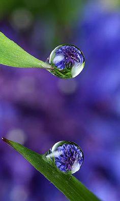 "thelordismylightandmysalvation: "" Dew Drops """