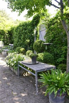 Shade Garden Ideas Starting a Shade Garden Shade Garden Ideas. The shade garden can be exploding with color and texture. No matter how much shade is in your landscape, the right flowers, plants, bu… Back Gardens, Small Gardens, Outdoor Gardens, White Gardens, Garden Spaces, Shade Garden, Dream Garden, Garden Inspiration, Wedding Inspiration
