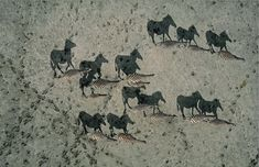 National Geographic's Shadow Zebras Illusion.