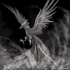 phoenix bird drawing