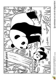 Une maman panda géant et son bébé au milieu d'une forêt de bambous, à colorier
