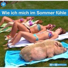 Wie ich mich im Sommer fühle - Fettes Schwein mit Freunden am Strand - Dicken- und Fettenwitze