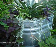 Galvanized tanks as a planter