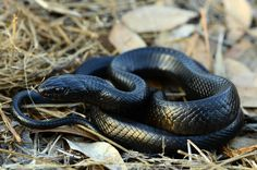 3. Snakes - 100,000 deaths a year Snake bites killmore than 100,000 people…