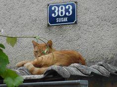 fischis cooking and more: bootstörn in kroatien - susak