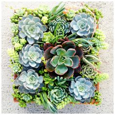 Vertical garden: beautiful! I want to try this. A box with a piece of lattice over it. I think it would have to be really well rooted before you turned it vertical.