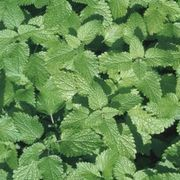 How to Kill Mint & Replant Vegetables   eHow