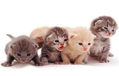 "As springtime begins so too does ""kitten season,"" and Alley Cat Allies, the nation's largest advocacy organization dedicated to cats, today offers 5 easy ways people can help cats and kittens this season. Newborn Kittens, Baby Kittens, Cute Cats And Kittens, I Love Cats, Crazy Cats, Kittens Cutest, Animals And Pets, Baby Animals, Cute Animals"