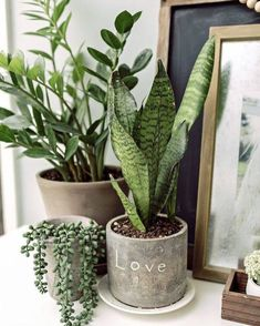 Do you struggle to keep your indoor plants alive? I& got 6 indoor plants m. - - Do you struggle to keep your indoor plants alive? I& got 6 indoor plants made for those of us with a black thumb. Let& talk about some unki. Succulents Garden, Garden Plants, Planting Flowers, Pot Plants, Faux Plants, Tomato Plants, Nature Plants, Green Nature, Plant Pots