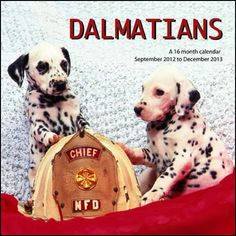 Dalmatians Wall Calendar: Dalmatians once served as firehouse mascots—the dogs were easily trained to run in front of the carriages to help clear a path and quickly guide the horses and firefighters to the fires.  http://www.calendars.com/Dalmatians/Dalmatians-2013-Wall-Calendar/prod201300001888/?categoryId=cat10058=cat10058#