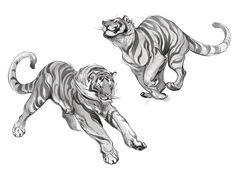 Animal Blog: RAWR!
