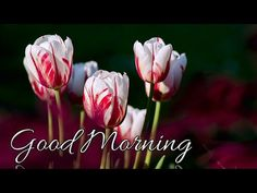 Good Morning video songs for whatsapp Happy Morning Quotes, Good Morning Image Quotes, Good Morning Photos, Good Morning Messages, Good Morning Wishes, Good Morning Tea, Good Morning Romantic, Good Morning Beautiful Images, Good Morning Sweetheart Images