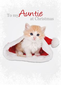 Pictures Of Cute Kittens Wallpapers Wallpapers) – Adorable Wallpapers Cute Kittens, Baby Kittens, Cats And Kittens, Tier Wallpaper, Cute Cat Wallpaper, Wallpaper Desktop, Live Wallpapers, Animal Wallpaper, Desktop Backgrounds