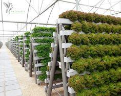 Hydroponics! #hydroponics #gardening #indoor vertical garden