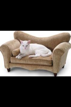 Cat furniture. Cute!