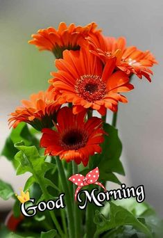 Good Morning Flowers Pictures, Good Morning Images, Flower Pictures, Calendula, Studio Background Images, Daisy Love, Good Morning Wallpaper, Beautiful Love Pictures, Beautiful Flowers Garden