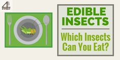 Edible Insects List – Which Insects Can You Eat? Bug Food, Edible Insects, Types Of Insects, Canning, Eat, Bugs, Beetles, Home Canning, Conservation