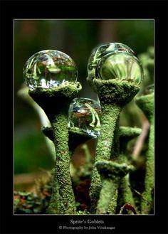 ✯ Sprite's Goblets ✯