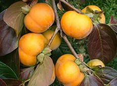 Fuyu fruit (a type of persimmon)