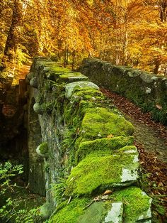 Medieval Bridge, Tollymore Forest, Ireland in autumn.