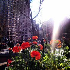 A sunny NYC morning view from Madison Square Park! #Summerinthecity