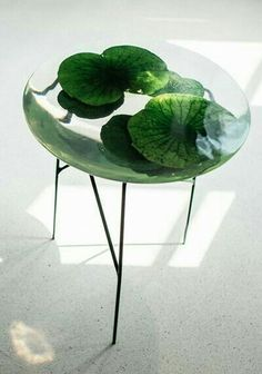 A gorgeous nature table