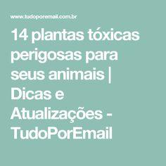 14 plantas tóxicas perigosas para seus animais | Dicas e Atualizações - TudoPorEmail
