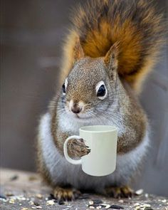 Coffee can make me squirrelly....