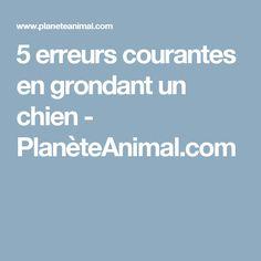 5 erreurs courantes en grondant un chien - PlanèteAnimal.com Dresser, Dog, Animals, Pets, Dog Cat, Dogs, Diy Dog, Powder Room, Animales