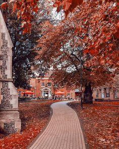 L'angleterre en automne. Jolies feuilles et couleurs Le Jolie, Nature Photography, Outdoor, Family Travel, England, Leaves, Autumn, Colors, Outdoors