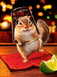 *Good to the last drop~~GIF Funny Happy Birthday Images, Funny Birthday Cards, Birthday Cheers, 22nd Birthday, Moving Pictures, Cute Pictures, Tierischer Humor, Funny Animals, Cute Animals