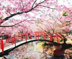 Inspiring Image Bridge Cherry Blossom Japan Sakura