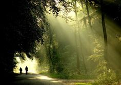 National Park Hoge Veluwe, the Netherlands