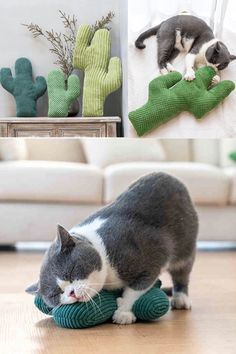 Cactus Cat, Crochet Cat Toys, Diy Cat Toys, Cool Cats, Cat Room, Here Kitty Kitty, Pet Memorials, Crazy Cats, Cats And Kittens