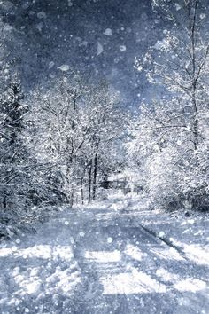 Winter Lane ~ There is something very special about leaving footprints behind in freshly fallen snow. Photographed in Owen Sound, Ontario Winter Lane by Linda Baker I Love Snow, Winter Love, Foto Picture, Nice Picture, Winter Schnee, Winter Magic, Snowy Day, Snow Scenes, Winter Beauty