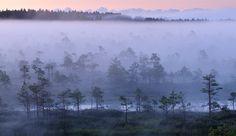 Misty morning in an Estonian bog